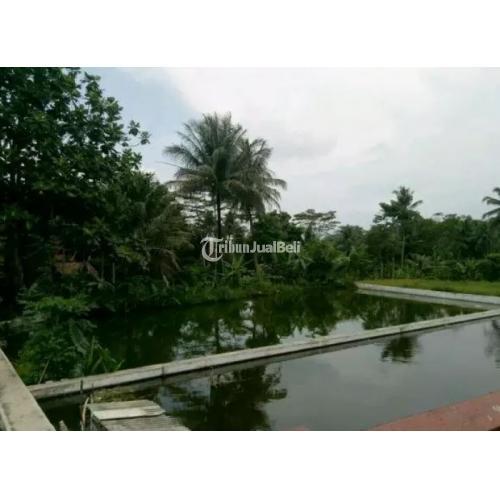 Balong Subur Dasar Kolam Tanah Asli Cocok untuk Usaha Budidaya Ikan - Tasikmalaya