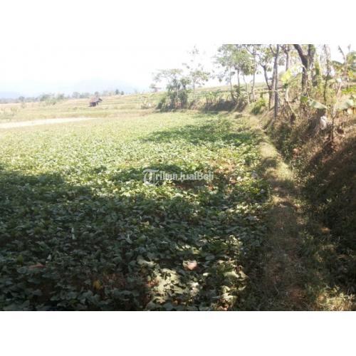 Dijual Tanah Sawah 2150m2 Pinggir Jalan Raya Harga Nego - Sumedang
