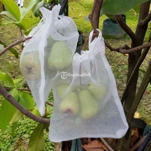 Heigrow / Fruit Cover/ Brongsong/ Pembungkus Buah Harga Mumer - Sidoarjo