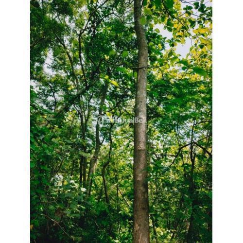 Jual Tanah Murah di Kebun Pohon Jati Kedawung Sragen Siap Bangun - Jawa Tengah