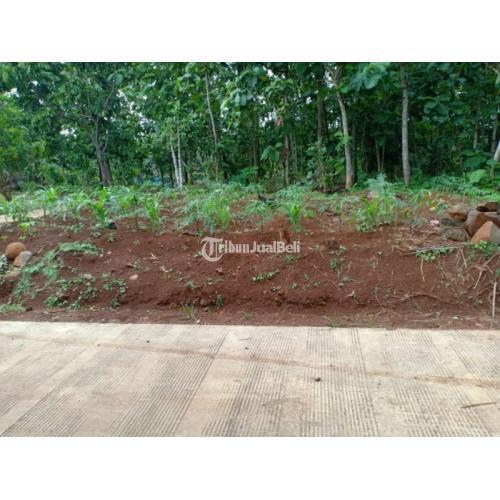 Jual Tanah Datar Subur Siap Dibangun Dekat Pasar Kerjo Karanganyar - Jawa Tengah