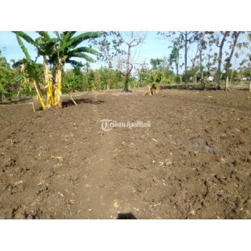 Jual Tanah Murah di Plosorejo Strategis SHM Siap Bangun - Sragen