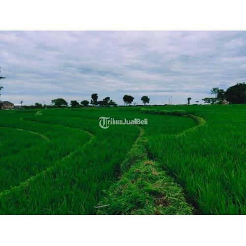 Dijual Tanah Sawah Pekarangan 1585m2 Karangpelem Kedawung - Sragen