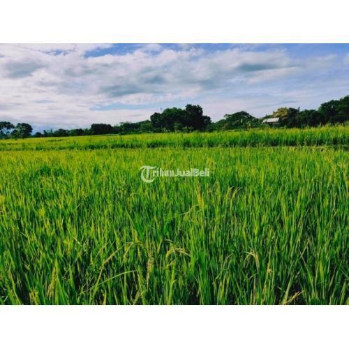 Dijual Tanah Sawah Subur Luas 400 m2 Mojogedang Lokasi Strategis - Karanganyar