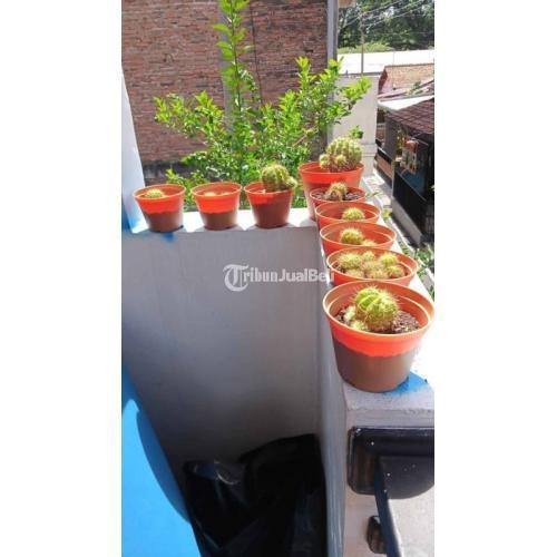 Kaktus Mini Isi 2 + Vas Banyak Pilihannya Mudah Perawatn Harga Nego - Semarang