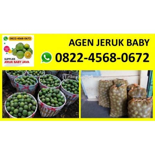Agen Jeruk Baby Java, Jeruk Peras, Jeruk Manis, Siap Melayani Pengiriman - Jakarta