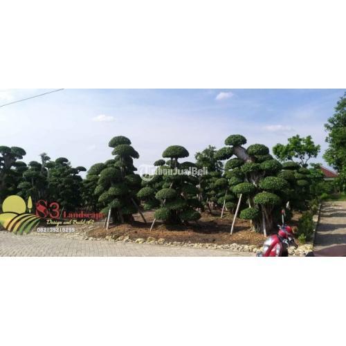 Tanaman Bonsai danPohon Hias Bisa Diantar Sampai Lokasi Harga Murah - Surabaya