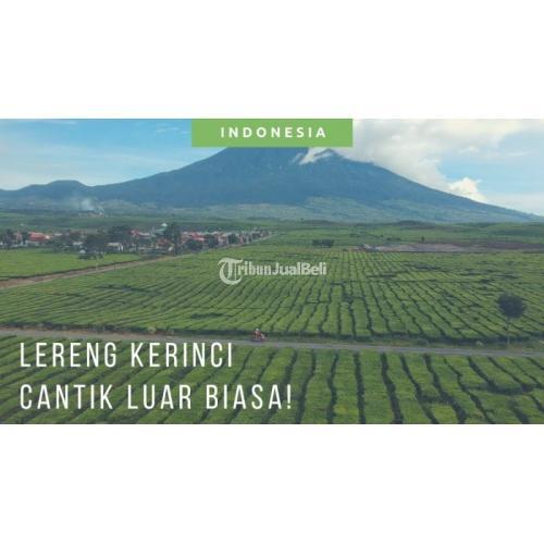 Teh Kayu Manis & Cassiavera Tea Bermanfaat unutk Kesehatan Minuman Herbal - Jakarta Timur