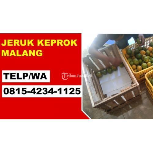 Grosir Jeruk Keprok Malang Melayani Pengiriman Kota-Kota Besar - Malang