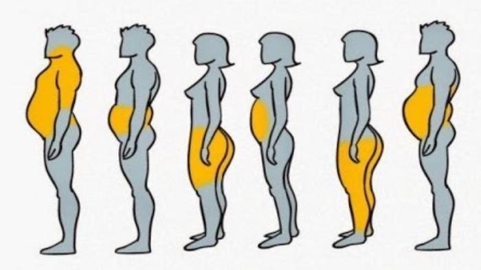 Miliki Tubuh Langsing dengan Metode Diet Berdasarkan Jenis Lemak yang Tertimbun