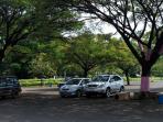Musim Hujan jangan Parkir Mobil di Bawah Pohon, Ini Alasannya