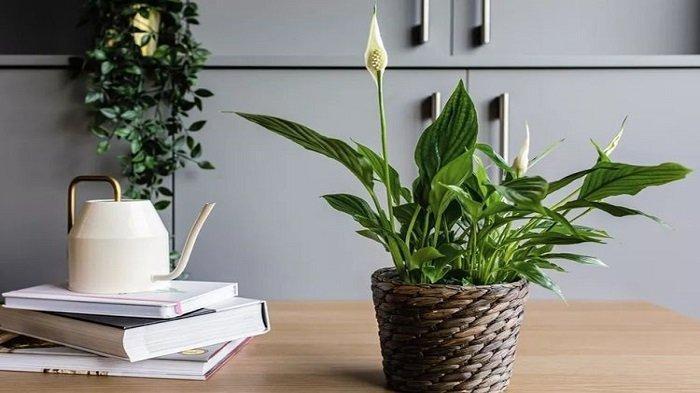Ternyata 4 Jenis Bunga Ini Bisa Bikin Tidur Lebih Nyenyak Jika Ditaruh Dalam Kamar