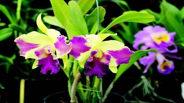 Intip Fakta Menarik Manfaat Menanam Bunga Anggrek Di Rumah Simak Juga Caranya Halaman 3 Blog Tribunjualbeli Com