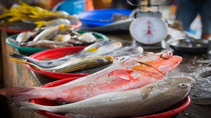 Kaya Manfaat, 3 Ikan Ini Harus Rutin Dikonsumsi
