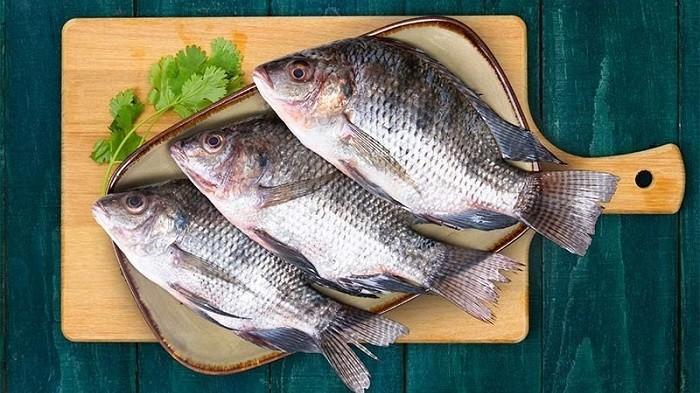 Bahaya Konsumsi Ikan Mujair Yang Tak Banyak Orang Tahu Blog Tribunjualbeli Com