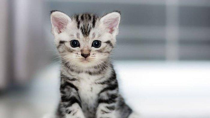 Akuratkah Insting Kucing Untuk Prediksi Datangnya Gempa Bumi?