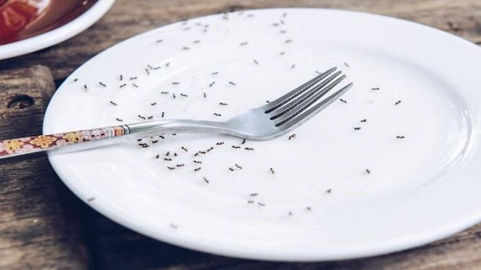 Dijamin Dapur Bebas Semut, Gunakan 8 Bahan Ini untuk Mengusirnya