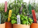 Ingin Menanam Tanaman Herbal di Rumah? Ikuti 7 Cara Mudah Ini
