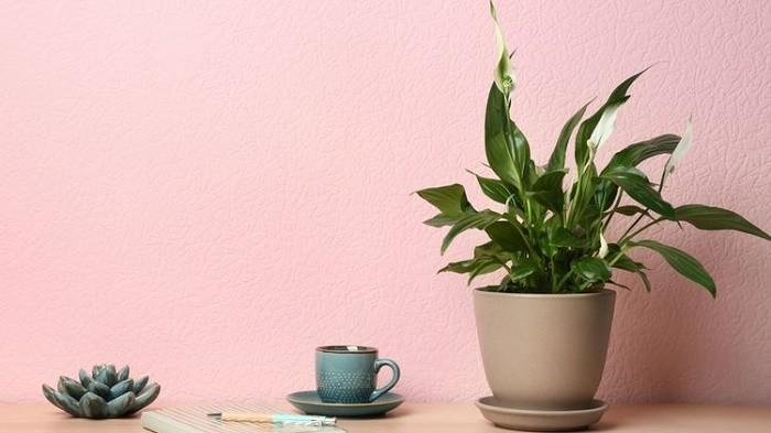4 Jenis Tanaman Hias Ini Tak Perlu Perawatan Rutin, Cocok untuk Kamu yang Tidak Telaten